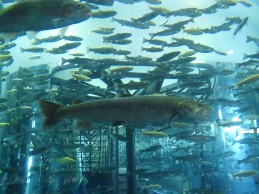 森の中の水族館 (20)