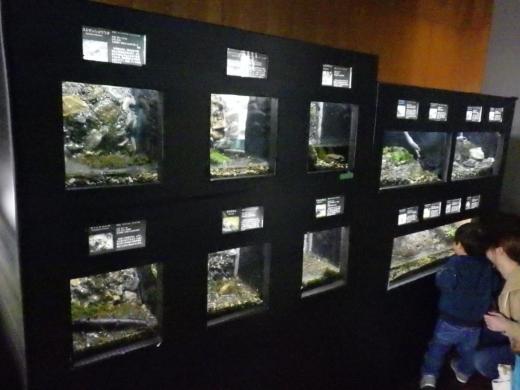 森の中の水族館 (21)