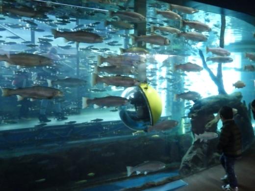 森の中の水族館 (25)