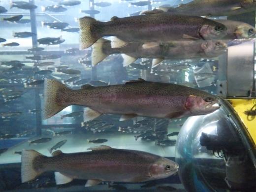 森の中の水族館 (26)