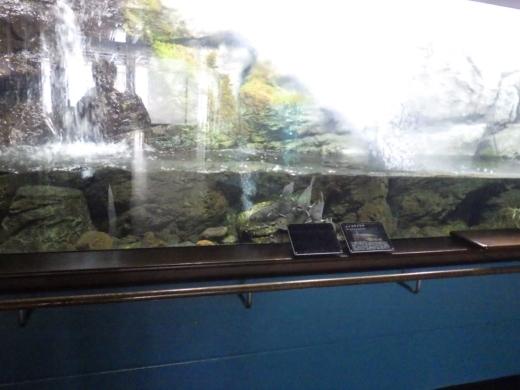 森の中の水族館 (30)
