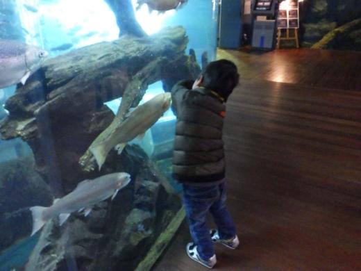 森の中の水族館 (27)