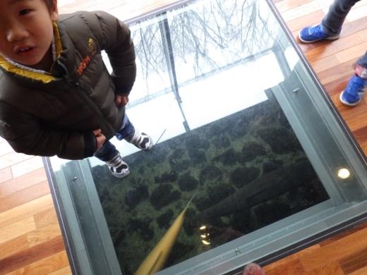 森の中の水族館 (32)