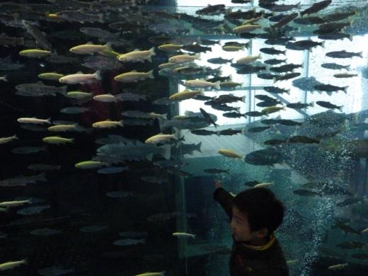 森の中の水族館 (37)
