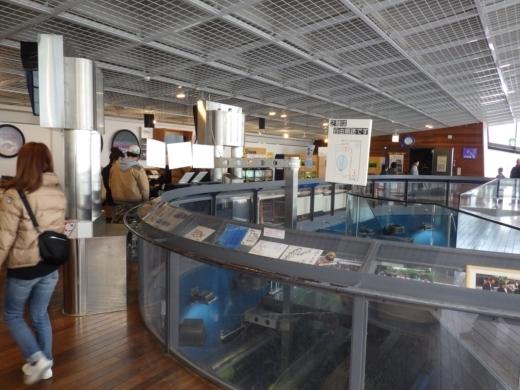 森の中の水族館 (39)