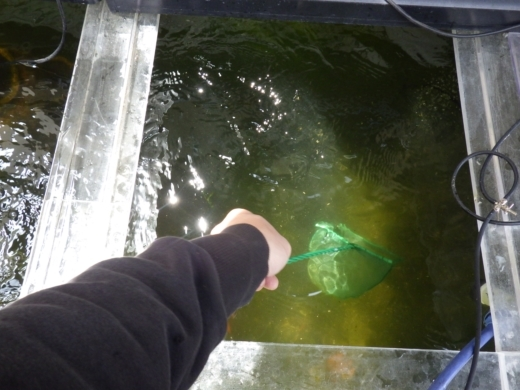 水槽の濾過 (6)