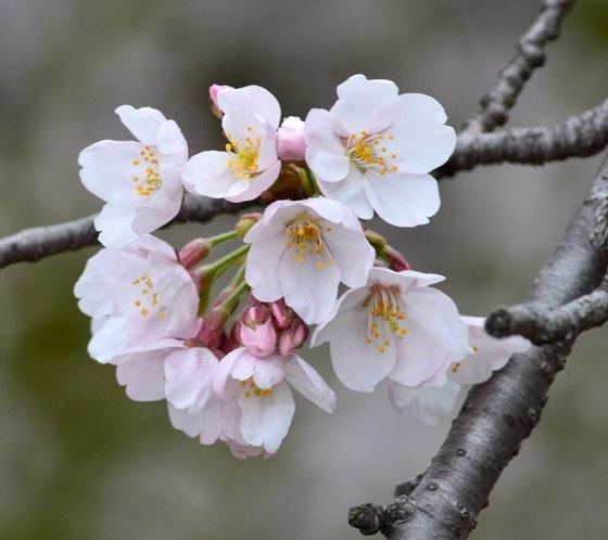 DSC_9190かなり開花
