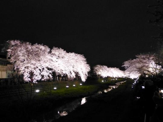 17_04_12-01nogawasakura.jpg