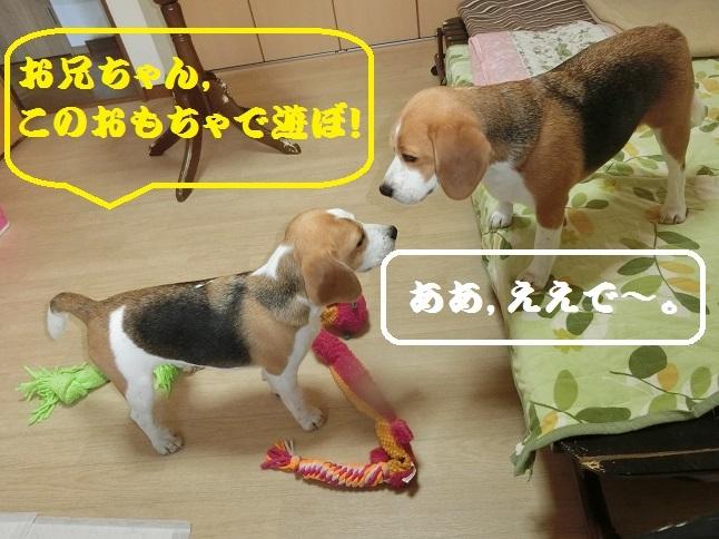 TARO&JIROは,毎日元気になかよく遊んでいます!