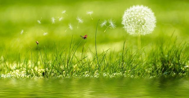 meadow-2225250_640.jpg