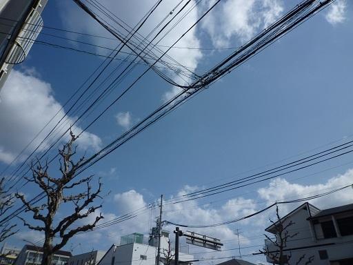 P1070578.jpg