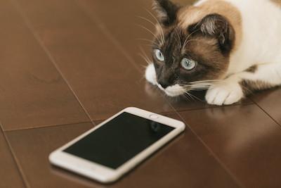 cat9V9A9021_TP_V.jpg