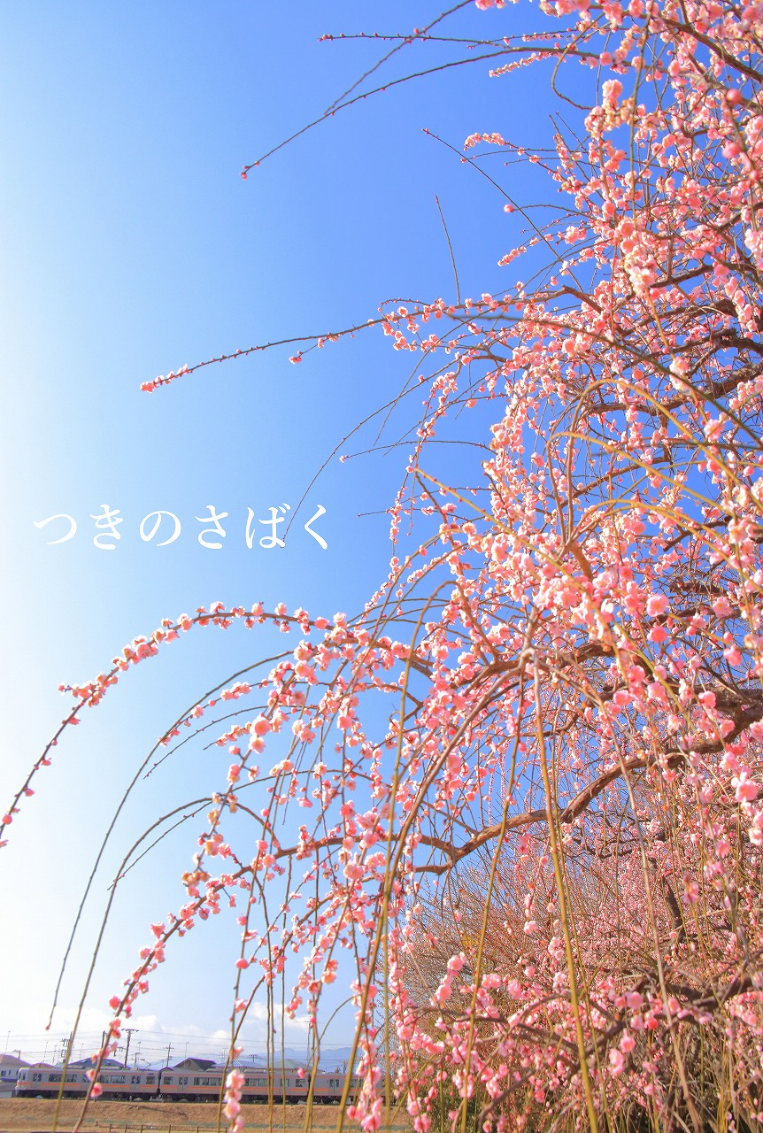 IMG_3846f5600_1.jpg