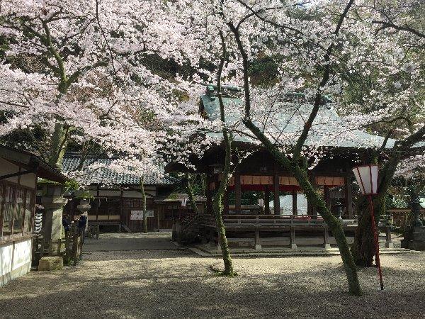 kanakasakigu2-tsuruga-041.jpg