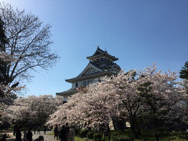 nagahamajoh-sakura-009.jpg
