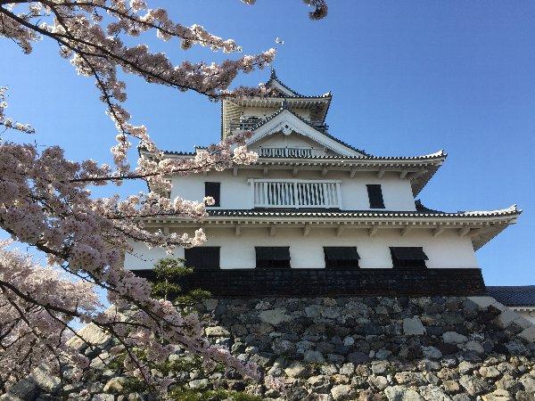 nagahamajoh-sakura-014.jpg