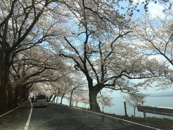okubiwako-sakura-007.jpg