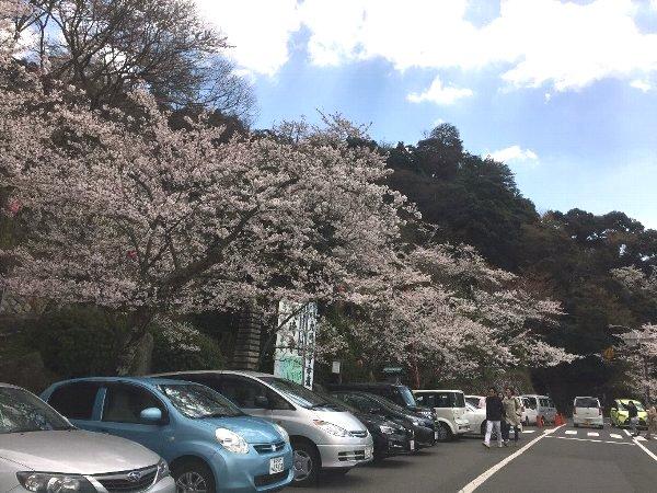okubiwako-sakura-009.jpg