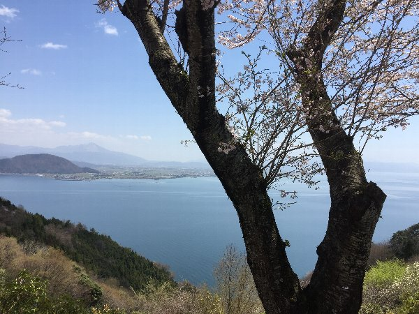 okubiwako-sakura-020.jpg