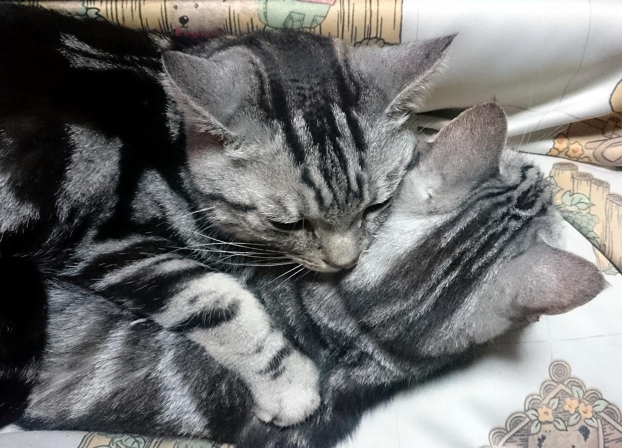 20170303-Cats_Sons-X01.jpg