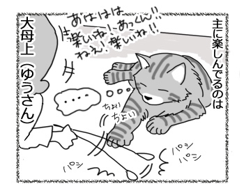 01032017_cat4.jpg