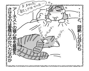 03042017_cat4.jpg