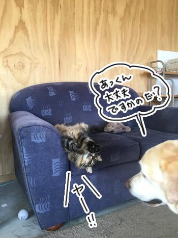 05032017_cat1.jpg