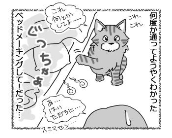 05042017_cat4.jpg