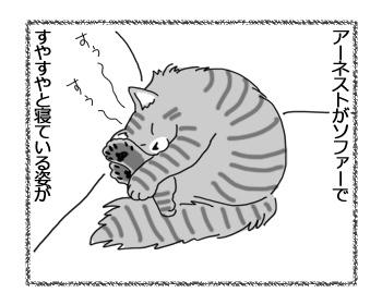 06042017_cat1.jpg