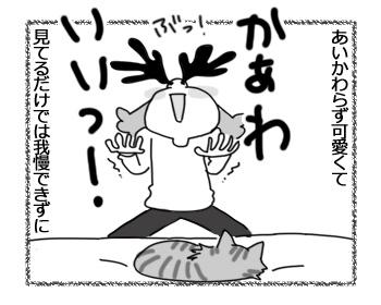 06042017_cat2.jpg