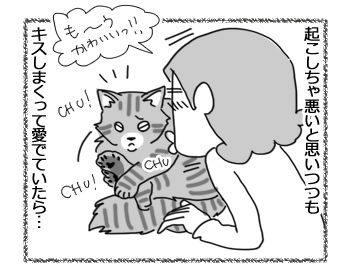 06042017_cat3.jpg