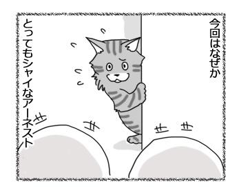 07032017_cat2.jpg