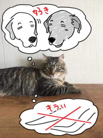 08032017_cat5.jpg