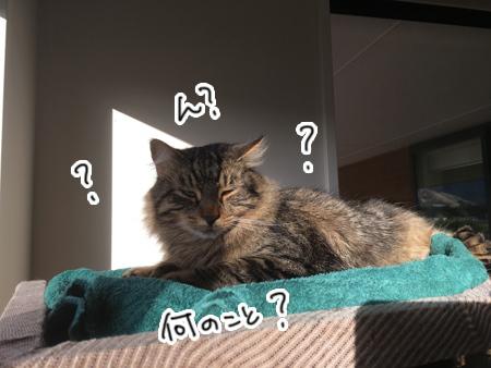 08042017_cat5.jpg