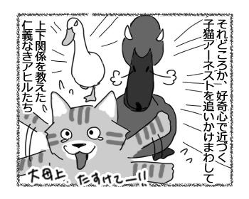 09032017_cat2.jpg