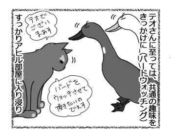 09032017_cat3.jpg
