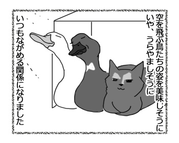 09032017_cat4.jpg