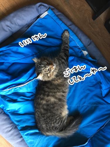09042017_cat2.jpg