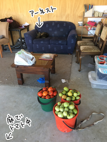 09042017_cat3.jpg