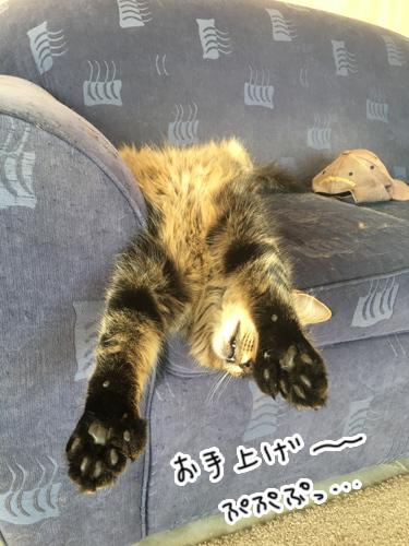 09042017_cat4.jpg