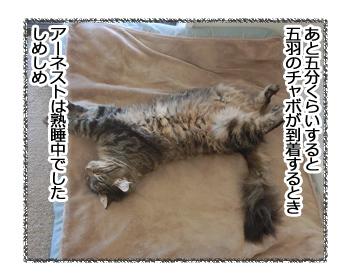 10032017_cat1.jpg