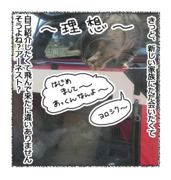 10032017_cat3.jpg