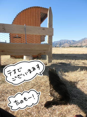 10032017_cat6.jpg