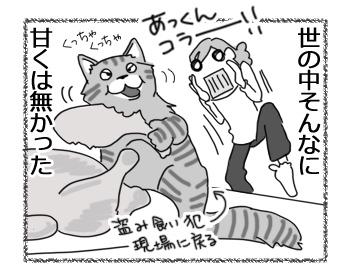 10042017_cat4.jpg