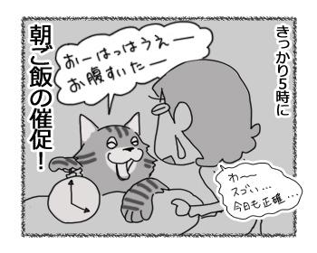 11022017_cat4.jpg