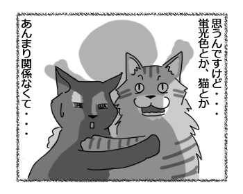 11042017_cat3.jpg