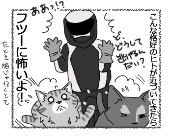11042017_cat4.jpg