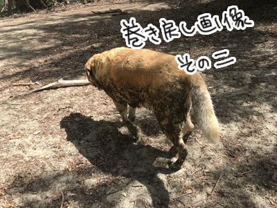 12022017_cat6.jpg