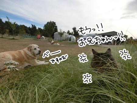 12032017_cat3.jpg