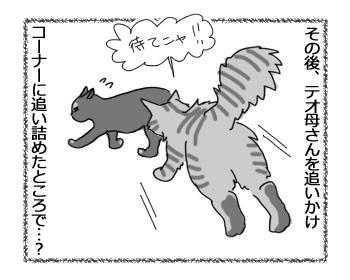 13032017_cat4.jpg